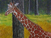 Giraffe Pastels Posters - Giraffe at The Riverbanks Zoo Poster by Richard Goohs