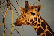 Giraffe Photos - Giraffe Digital Painting by Angella  Day