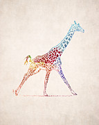 Animal Drawings Posters - Giraffe Drawing Poster by World Art Prints And Designs