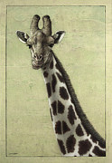 Giraffe Framed Prints - Giraffe Framed Print by James W Johnson