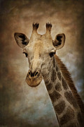 Lyn Darlington - Giraffe