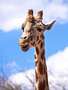 Marilyn Hunt - Giraffe Speak