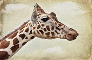 Patches Framed Prints - Giraffe Framed Print by Svetlana Sewell