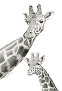 Baby Shower Drawings Framed Prints - Giraffes- Black And White Framed Print by Sarah Batalka