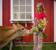 Light-years Posters - Girl Feeding Her Flowers To Calf Poster by Hasnain Dattu