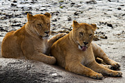 Namibia Prints - Girlfriends Print by Gert Lavsen