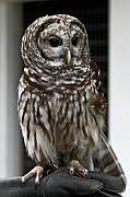 John Haldane Prints - Give a Hoot Print by John Haldane