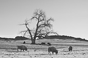 Wildlife And Nature Photos Art - Give Me A Home Where The Buffalo Roam by James Bo Insogna