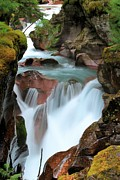 West Glacier Photos - Glacier Avalanche Creek by Adam Jewell