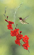 Red And Green Photo Posters - Glad Hummingbird Poster by Angie Vogel