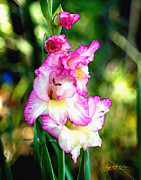 Gladiolas Digital Art Prints - Glad Watercolor Print by Jeff McJunkin