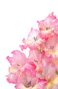 Bouquet Photo Posters - Gladiolus Poster by Olivier Le Queinec