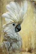 Umbrella Cockatoo Framed Prints - Glamour Girl Framed Print by Lois Bryan