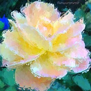Impressionism Art - Glazed Pale Pink And Yellow Rose  by Anna Porter