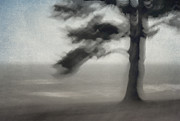 Mystical Landscape Posters - Glimpse of Coastal Pine Poster by Carol Leigh