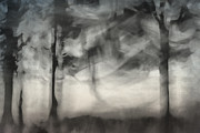 Mystical Landscape Posters - Glimpse of Coastal Pines Poster by Carol Leigh