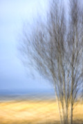 Blur Posters - Glimpse of Trees Sand and Beach Poster by Carol Leigh