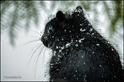 LeeAnn McLaneGoetz McLaneGoetzStudioLLCcom - Global Warming Squirrel