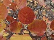 James Rishel Metal Prints - Glories of Autumn Metal Print by James Rishel