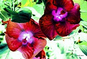 China Rose Prints - Glorious Hibiscus Print by Annie Zeno