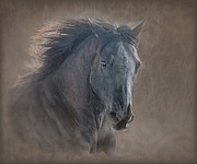 Grey Digital Art Framed Prints - Glory Galloping Black Horse Framed Print by Renee Forth Fukumoto