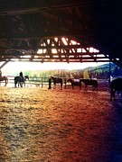 Trail Ride Art - Glory In Horses by J Ferwerda