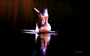 Greylag Prints - Glory Print by Olahs Photography