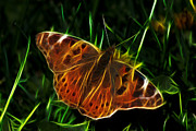 Insects - Glowing Butterfly by Shane Bechler