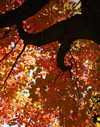 Turning Leaves Posters - Glowing Canopy Poster by Melany Raubolt