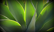 Karyn Robinson Metal Prints - Glowing Gorgeous Green Metal Print by Karyn Robinson