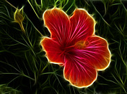 Flowers - Glowing Hibiscus by Shane Bechler
