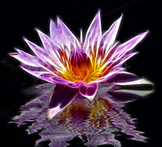 Reflecting Water Posters - Glowing Lilly Flower Poster by Shane Bechler