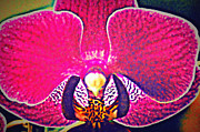 Laurie Pike - Glowing Orchid