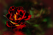Shirley Mangini - Glowing Rose