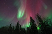 Northern Lights Posters - Glowing Skies Poster by Priska Wettstein