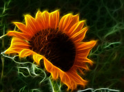 Fuzzy Mixed Media - Glowing Sunflower by Shane Bechler