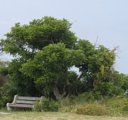 Park Benches Photos - Gnarled Tree and Bench by Cathy Lindsey