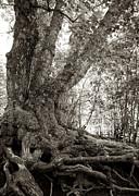 Mary Lee Dereske - Gnarled Tree