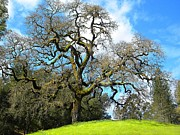 Wine Barrel Photo Originals - Gnarly Oak by Denny Brewer