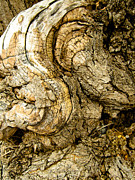 Wood Art - Gnarly Wood by Hakon Soreide