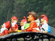 Ion vincent DAnu - Gnomes Don