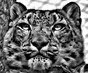 Feline Digital Art - Go Ahead...Make My Day bw by Steve Harrington