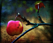 Apple Photos - Go On Dearie  Take A Bite by Theresa Tahara