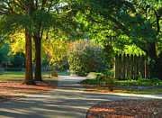 Fall Photographs Prints - Go Straight or Turn Right? Print by Ester  Rogers