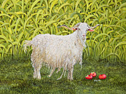 Apple Framed Prints - Goat Framed Print by Ditz