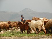 Noreen HaCohen - Goat herder in Jordan...