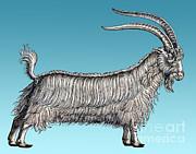 Science Source - Goat-Historiae Animalium-16th Century