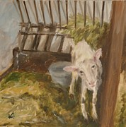 Veronica Coulston - Goat Looking at You