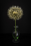Green Glass Glass Art - Goats Beard In Vase by Mitch Shindelbower