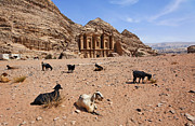 Petra Metal Prints - Goats in front of the Monastery at Petra in Jordan Metal Print by Robert Preston